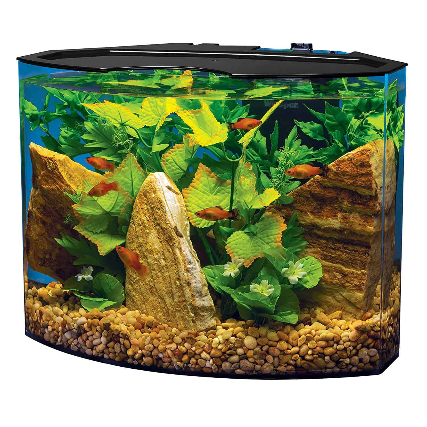 5 Best Nano Tanks For Your Home Or Office