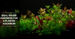 Ideal Water Hardness for a Planted Aquarium (KH & GH)
