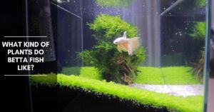 What Kind of Plants Do Betta Fish Like?
