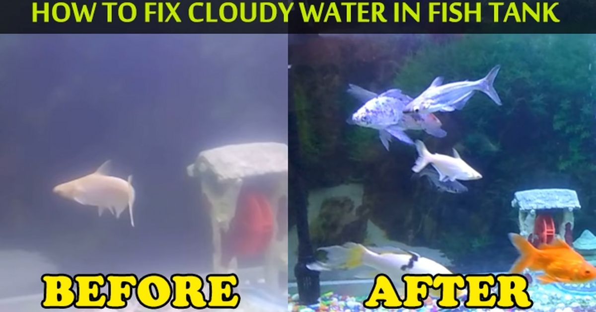 Cloudy Water In An Established Aquarium (Prevention & Treatment)