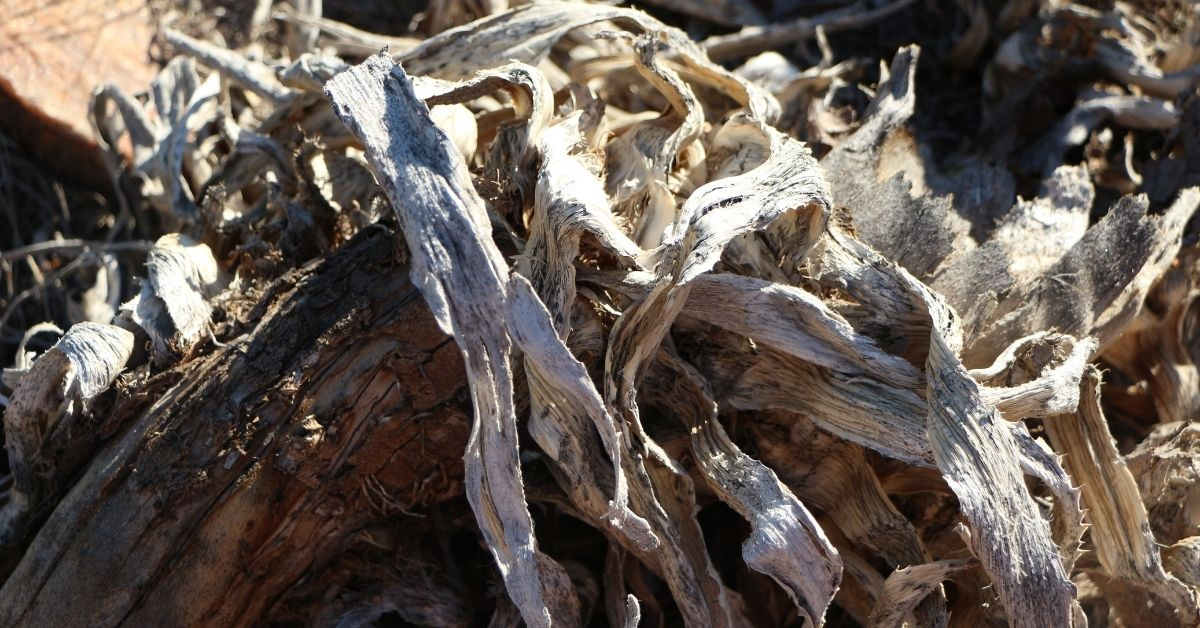 How Long to Boil Driftwood to Remove Tannins?